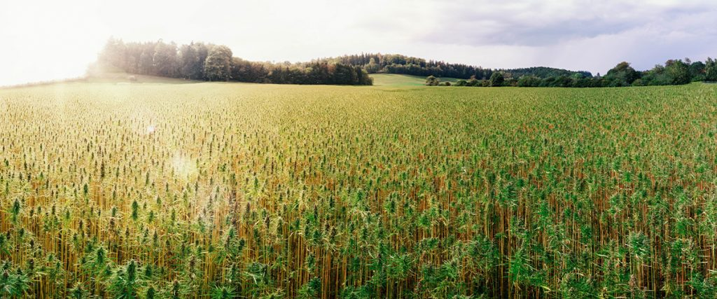Hemp acreage U.S.